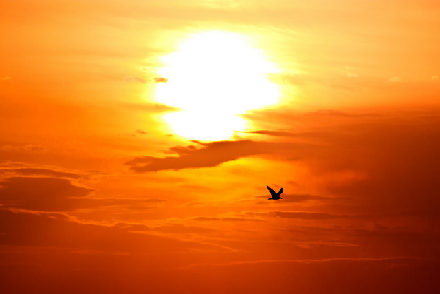 Morning flight by Theophilos Papadopoulos